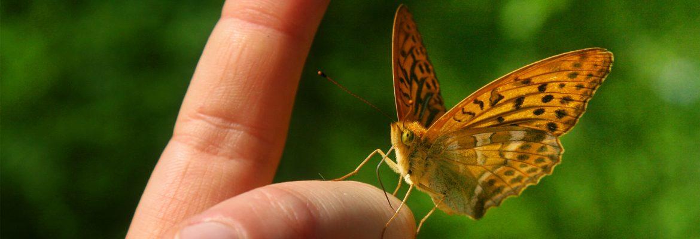 06-07-29-SchmetterlingsHand